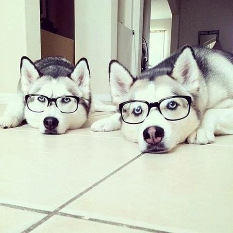 عکس سگ های خانگی | عکس سگ دارای نژاد | عکسهای بازمزه از سگها | عکس سگ های تربیت شده | عکسهای دیدنی از رابطه انسان و سگ | عکس دوستی انسان و حیوانات | عکس سگ