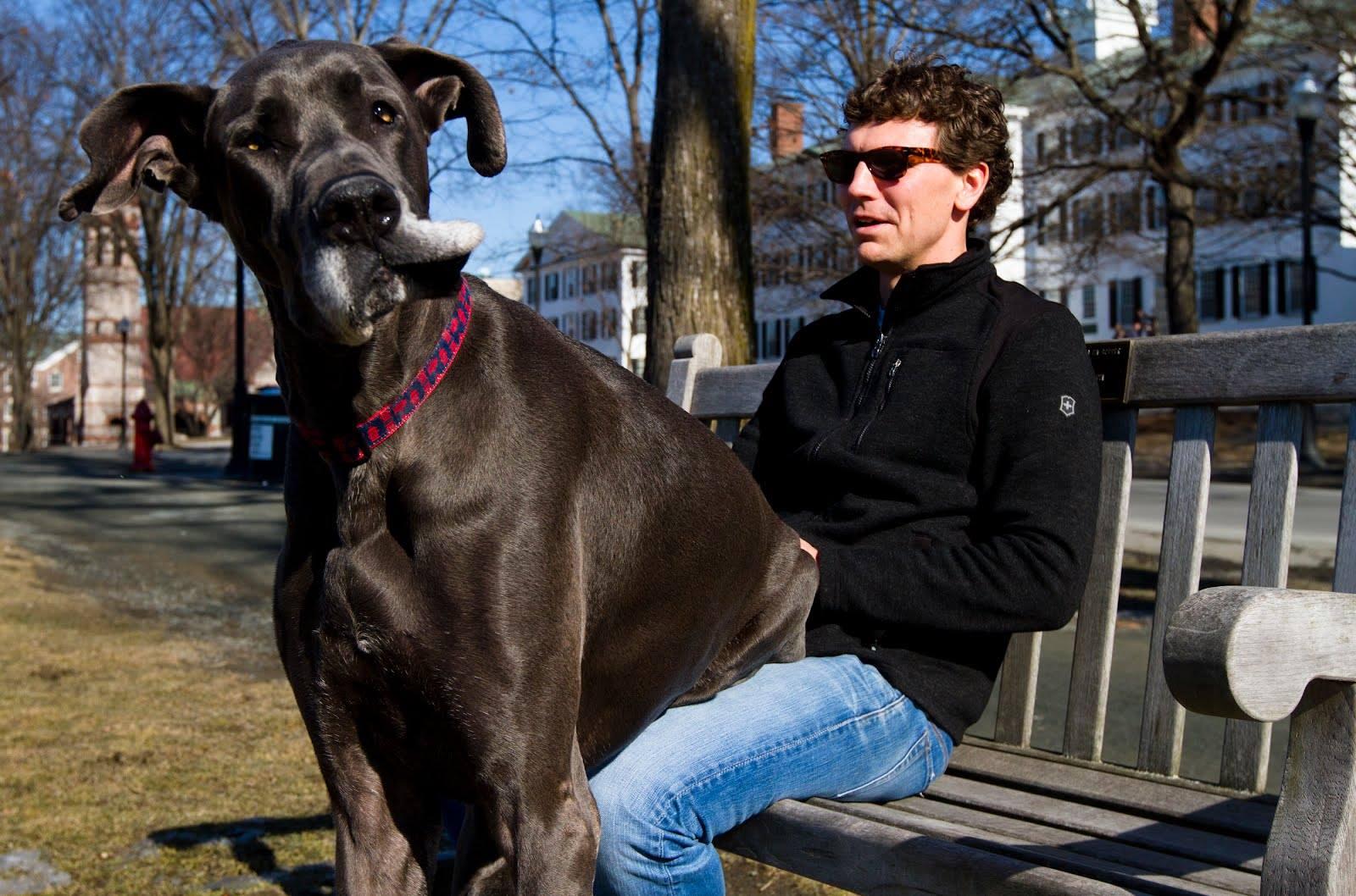عکس سگ های وحشی بزرگ | تصاویر بزرگترین سگ دنیا | اندازه بزرگترین سگ جهان | عکسهای عجیب از بزرگترین سگ ها | قوی ترین نژاد سگ | عکس سگ های خانگی بزرگ | biggest dog