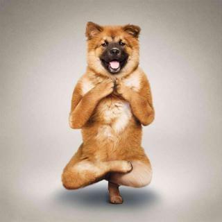 عکسهای خیلی خنده دار | عکس سوژه خنده خارجی | تصاویر بامزه و خنده دار | سایت عکس خنده دار جدید | عکسهای خنده دار فیس بوکی | خنده دارترین عکسهای فیس بوک | funny