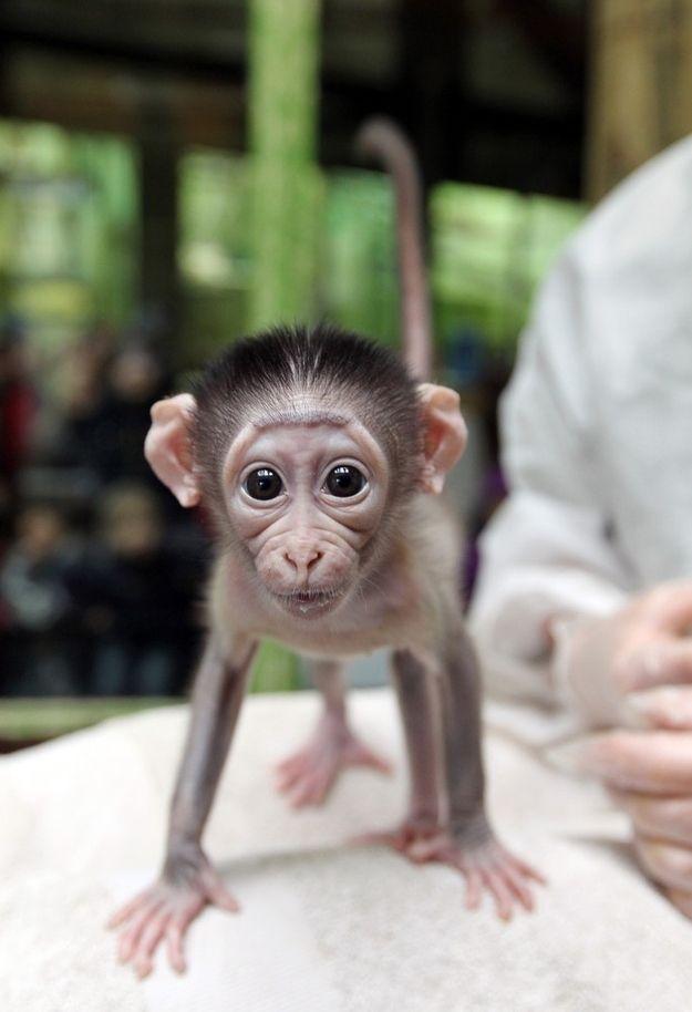عکسهای جالب از زندگی حیوانات | دنیای حیوانات وحشی | عکسهای دیده نشده از حیوانات | والپیپر با کیفیت از حیوانات | تصاویر حیوانات عجیب | عکسهای خنده دار حیوانات