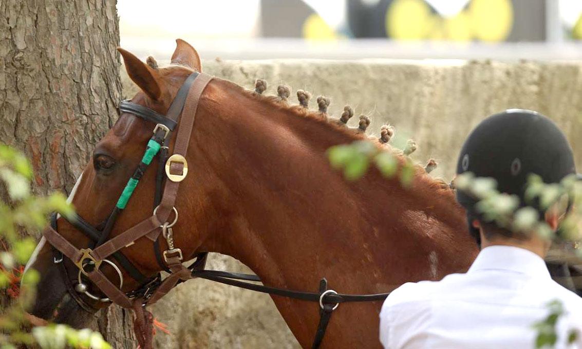 عکس مسابقات اسب سواری بانوان | تصاویر سوارکاری دختران | عکسهای مسابقات اسب دوانی | اخبار مسابقات پرش با اسب | عکسهای ورزش اسب سواری | تصویر پیست سوارکاری | عکس اسب های اصیل سوارکاری | دختران اسب سوار