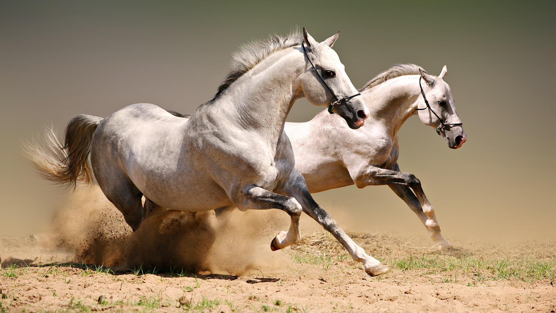 عکس جالب از حیوانات | عکس حیوانات بامزه | تصاویر حیوانات عجیب و غریب | عکس حیوانات ناشناخته | تصاویر دیده نشده از زندگی حیوانات | عکسهای با کیفیت طبیعت حیوان
