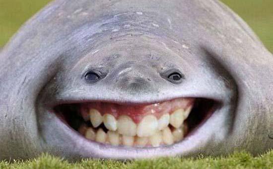 عکس خنده دار | عکس خنده دار جدید | عکس جالب ودیدنی | عکس | عکس جالب و دیدنی جدید | عکس های فتوشاپی | عکس های جالب از خطای دید | عکس ترسناک | عکس باحال | عکس ترسناک جدید | آریا فان