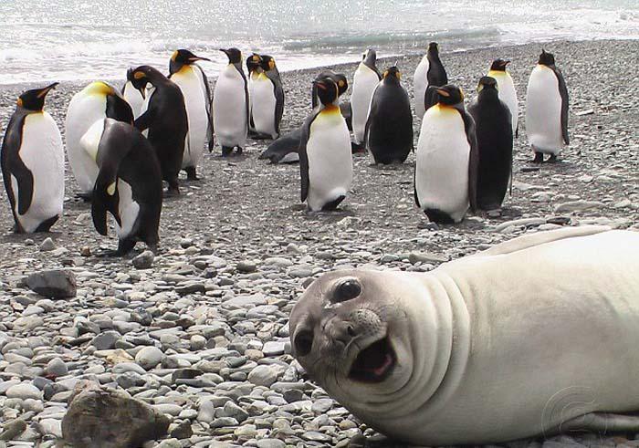 ژست های جدید حیوانات | ژست حیوانات برای دوربین | ژست های خنده دار حیوانات برای دوربین | عکسهای خنده دار جدید | عکس خنده دار حیوانات | عکس های دیدنی از حیوانات | عکس خنده دار جدید | عکس خنده دار | عکس خنده دار حیوانات جدید | ژست های خنده دار | آریا فان | سایت عکس