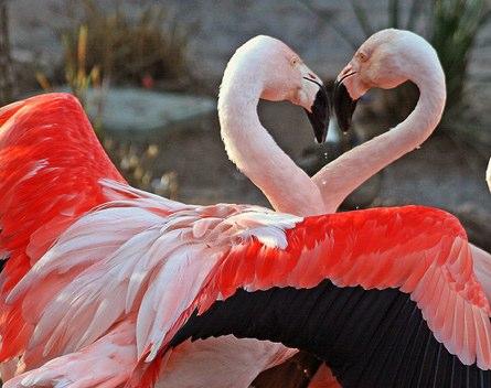 عکس های جدید عاشقانه | عکس عاشقانه و احساسی 2014 | جدیدترین عکس های عاشقانه | عکس عاشقانه و رمانتیک | عکس | love imag 2014 | گالری عکس های عاشقانه و احساسی | عکس های عاشقانه با موضوع قلب | عکس عاشقانه متحرک 2014 | عکس | سایت تفریحی آریا فان | عکس عاشقانه | lovely photos 2014 | عکس قلب | عکس عاشقانه دخترانه | عکس و اس ام اس عاشقانه 2014